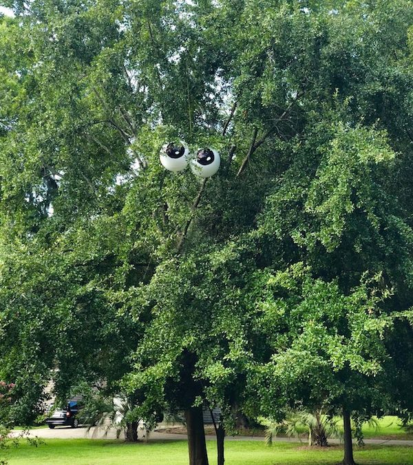 The Tree In My Front Yard Has Eyes – Having Some Creative Fun!
