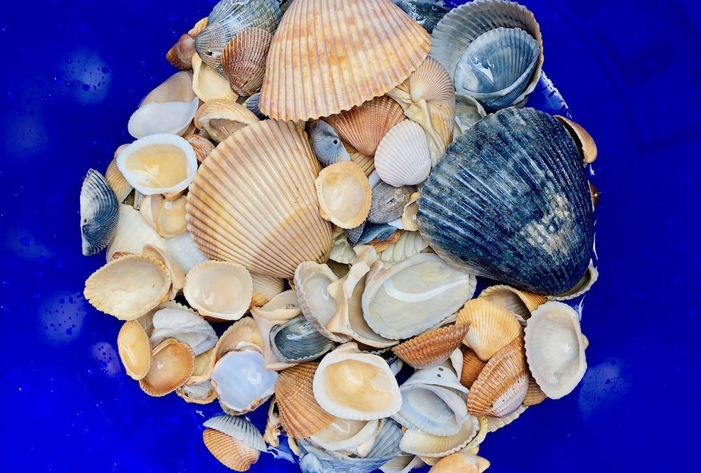The Connection Between Seashells And Our Comfort Zones