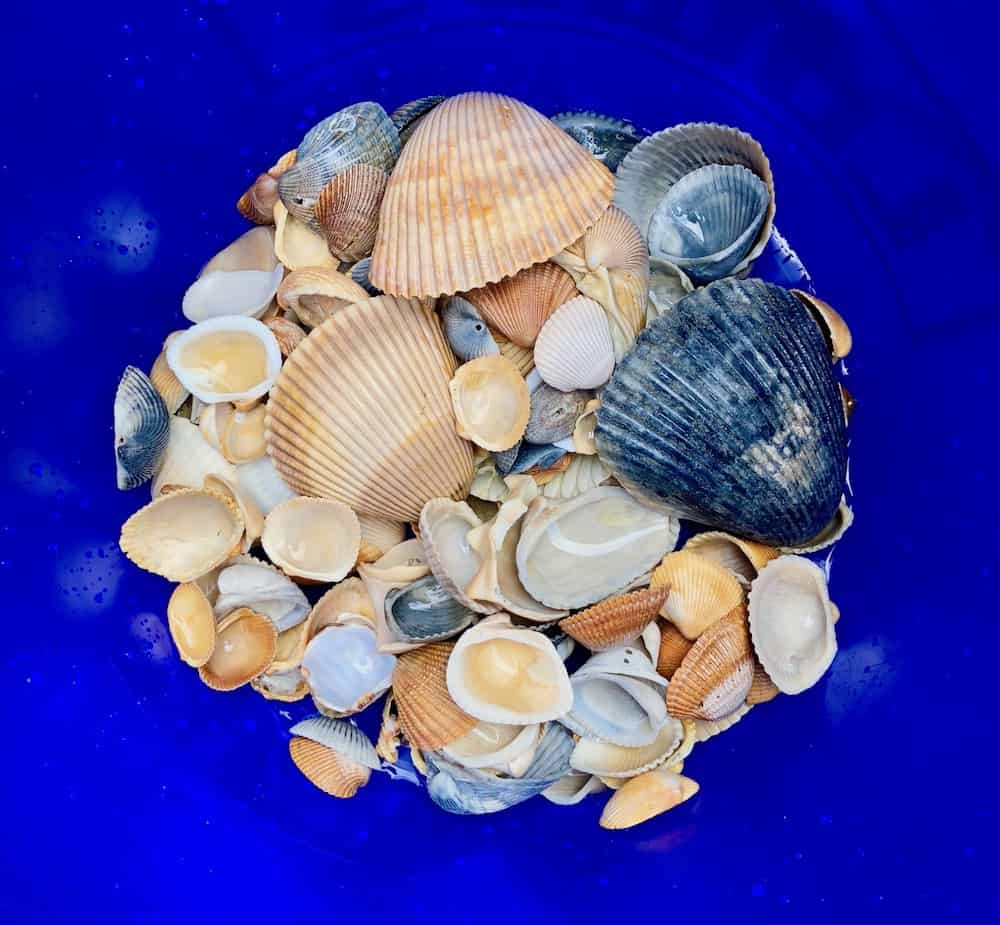 Seashells, Shells, Beach, Ocean, Sea, Sand, Surf, Waves, Comfort Zone, Growing, Learning,