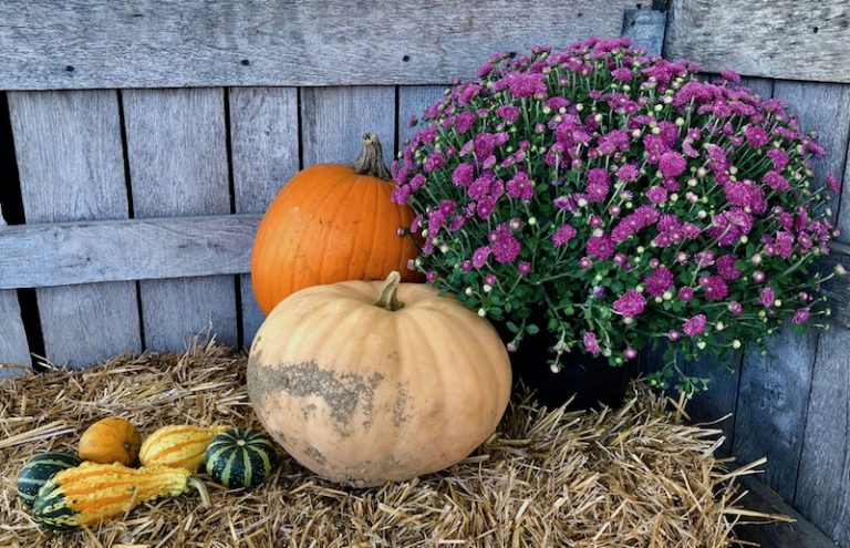 Fall, Fall Display, Fall Flowers, Pumpkins, Hay Bale, Autumn, Fall Season