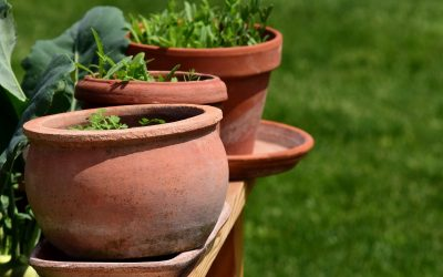 Time To Try Again To Grow A Herb Garden