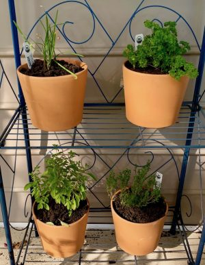 Herbs, Plants, Planting, Gardens, Cooking