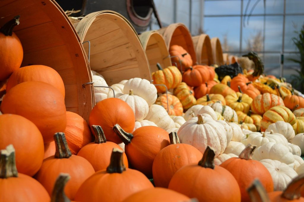 Fall, Autumn, Season, Pumpkins, Holidays